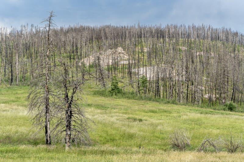 Floresta da montanha após o incêndio violento imagem de stock royalty free