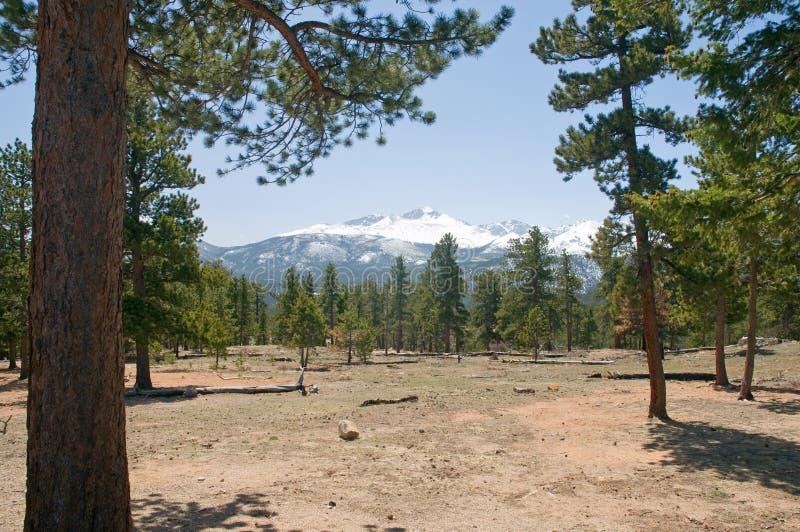 Floresta da montanha de Colorado fotos de stock