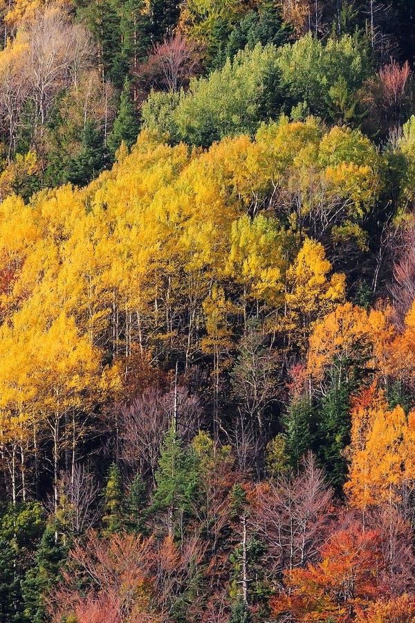 A floresta da montanha em árvores da cor do outono texture o fundo foto de stock royalty free