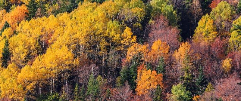 A floresta da montanha em árvores da cor do outono texture o fundo imagens de stock royalty free