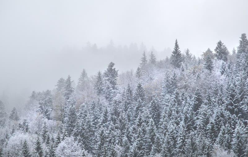 Floresta da montanha na névoa densa do inverno imagens de stock