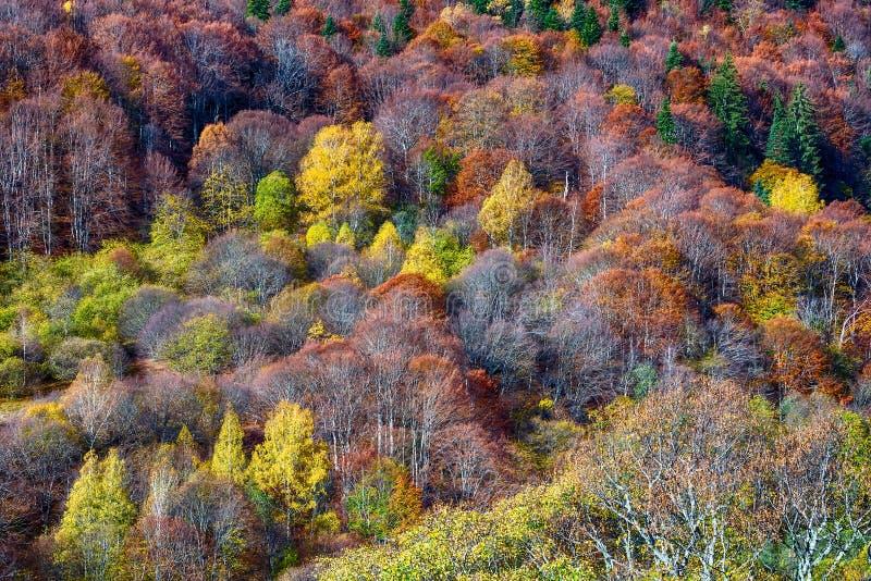 Floresta da montanha no fundo da textura das árvores do outono foto de stock royalty free