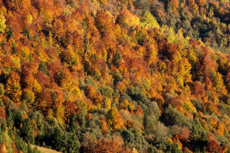 Floresta da montanha da queda fotos de stock royalty free
