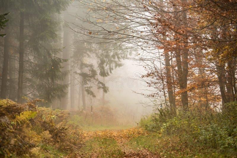 Floresta da névoa da manhã foto de stock royalty free