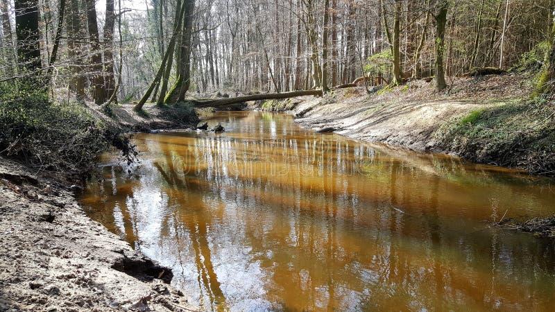 Floresta da natureza em seu melhor fotos de stock