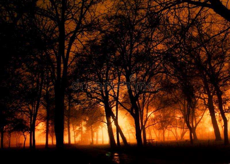 Floresta da noite fotos de stock