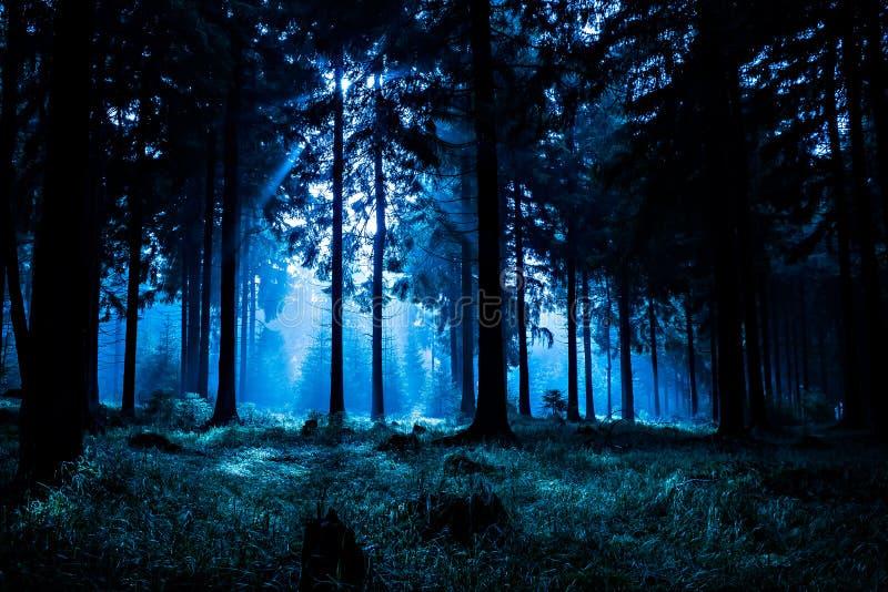 Floresta da noite imagens de stock royalty free
