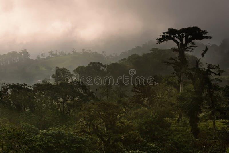 Floresta da nuvem de Costa-Rica imagem de stock royalty free