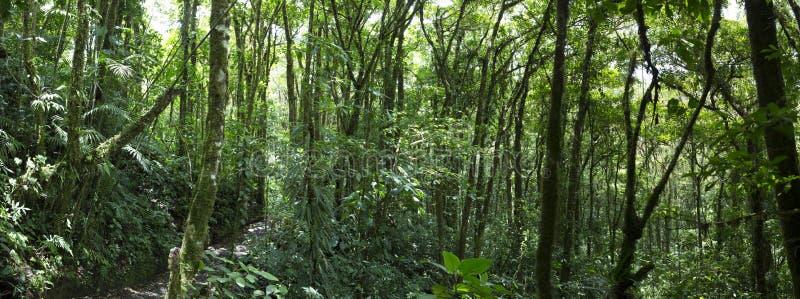 Floresta da nuvem em Costa Rica imagens de stock royalty free