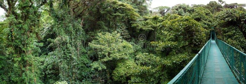 Floresta da nuvem em Costa Rica fotos de stock royalty free