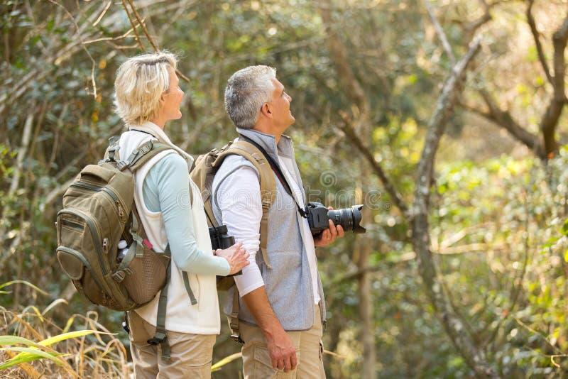 Floresta da ornitologia dos pares fotos de stock royalty free
