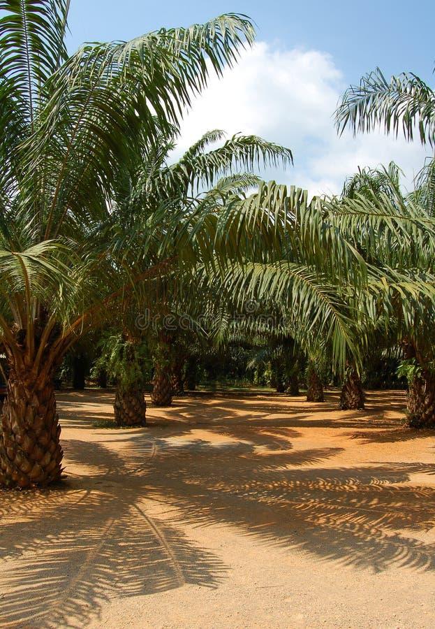 Floresta da palma imagens de stock