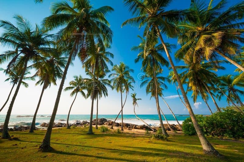 Floresta da palma fotos de stock royalty free