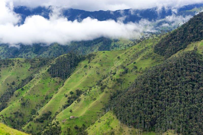 Floresta da palma de cera perto de Salento fotografia de stock