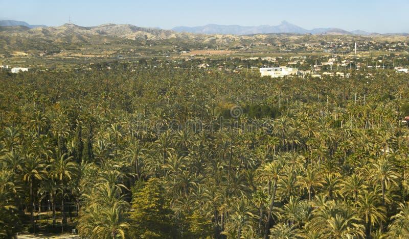 Floresta da palmeira em Elche Alicante spain imagens de stock royalty free