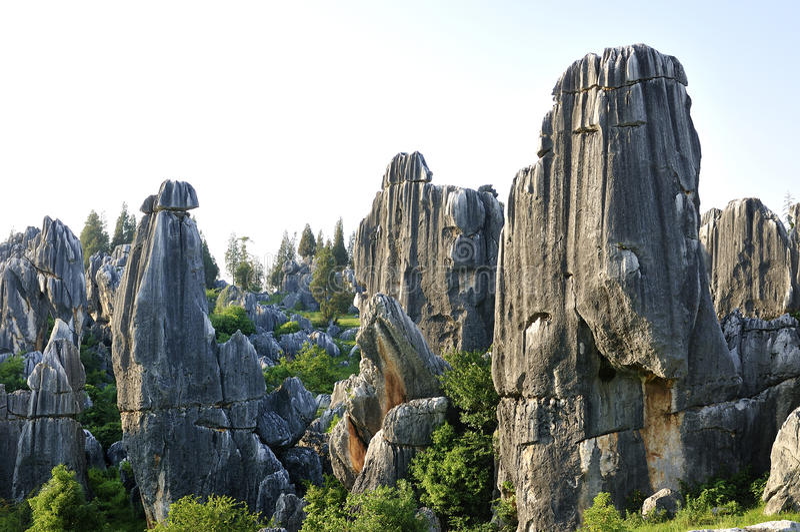 Floresta da pedra de China foto de stock