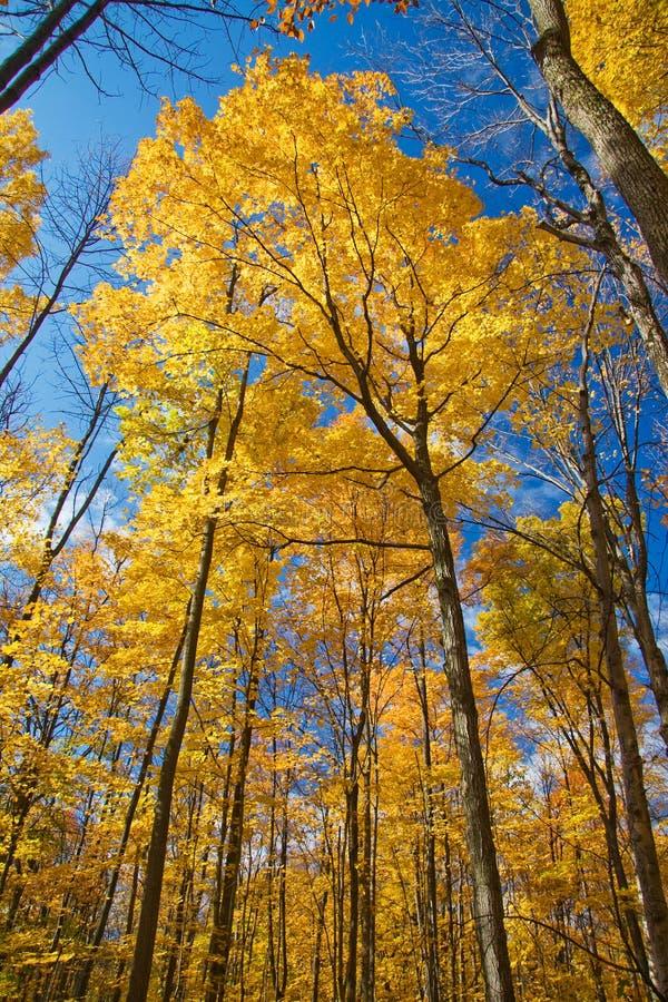 Floresta da queda em HDR foto de stock