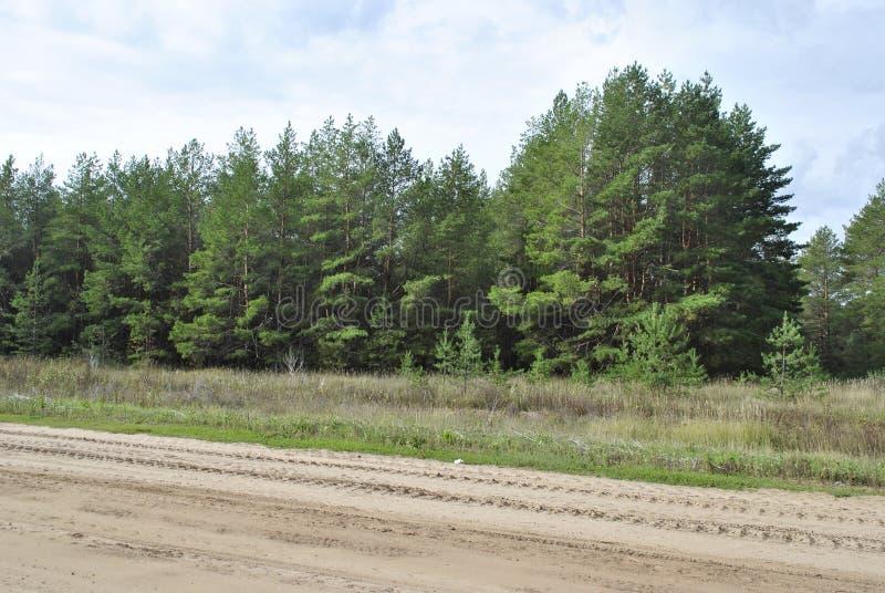Floresta da região de Saratov fotografia de stock royalty free