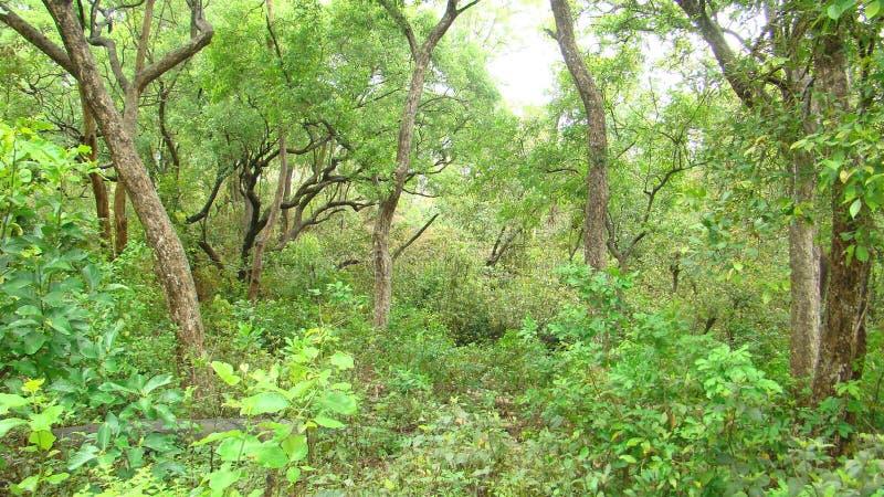 Floresta da reserva imagens de stock