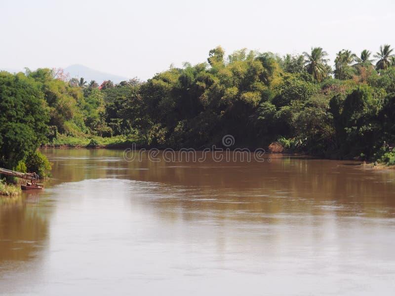 Floresta da selva da árvore da planta verde no banco de rio marrom da água fotografia de stock royalty free