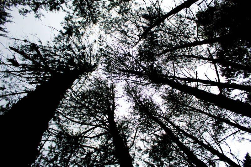Floresta da silhueta imagem de stock