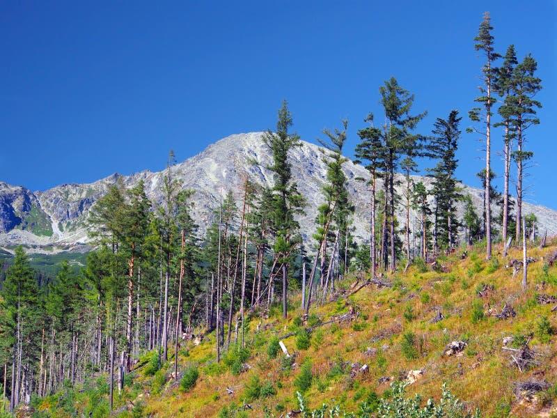 Floresta danificada em montanhas elevadas de Tatra imagens de stock