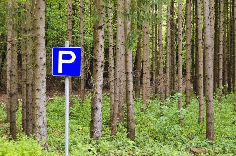 Floresta das coníferas com área de estacionamento imagem de stock royalty free