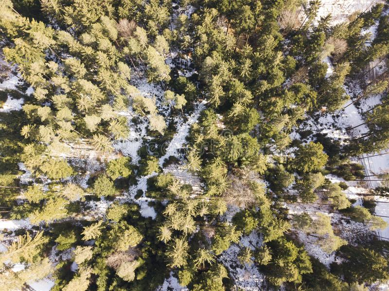 Floresta das coníferas de cima no zangão do tempo de inverno foto de stock