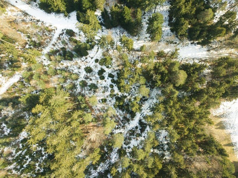 Floresta das coníferas de cima no zangão do tempo de inverno imagens de stock