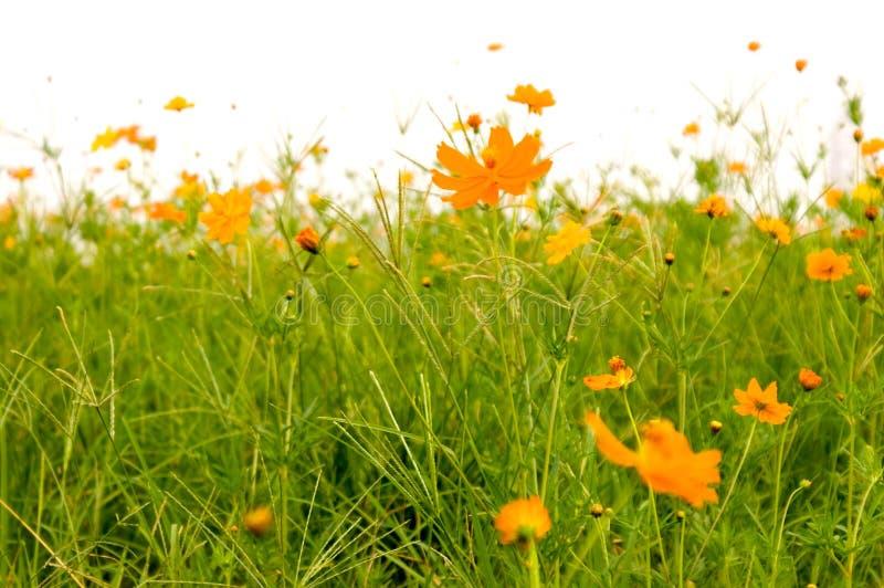 Floresta das flores imagem de stock