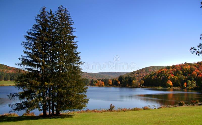 Floresta de Allegheny imagens de stock royalty free