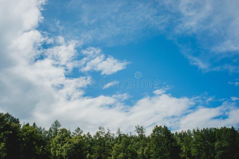 Floresta de Altay fotos de stock