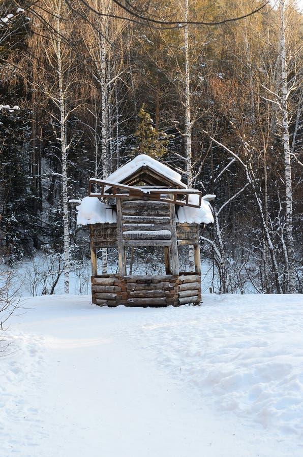 Floresta de Altay imagens de stock