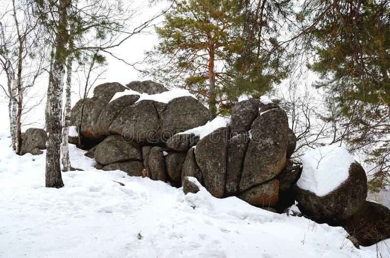 Floresta de Altay imagem de stock