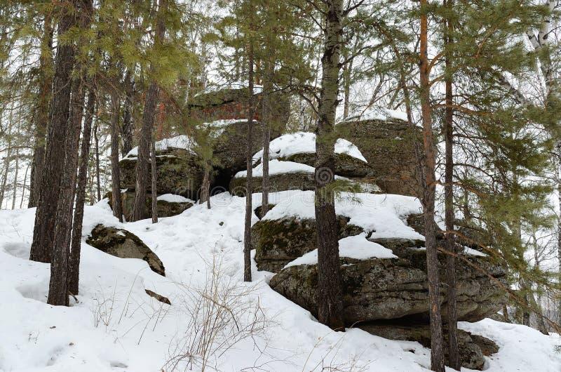 Floresta de Altay fotografia de stock