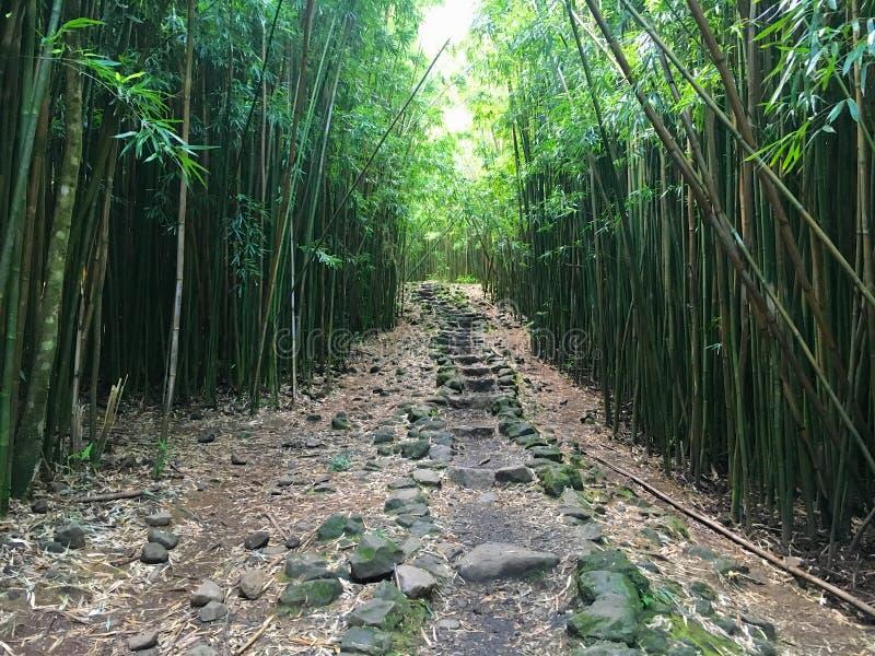 Floresta de bambu ao longo da fuga de Pipiwai imagens de stock
