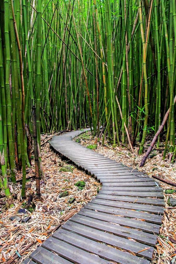 Floresta de bambu ao longo da fuga de Pipiwai em Maui que pode ser encontrado perto da estrada a Hana foto de stock royalty free