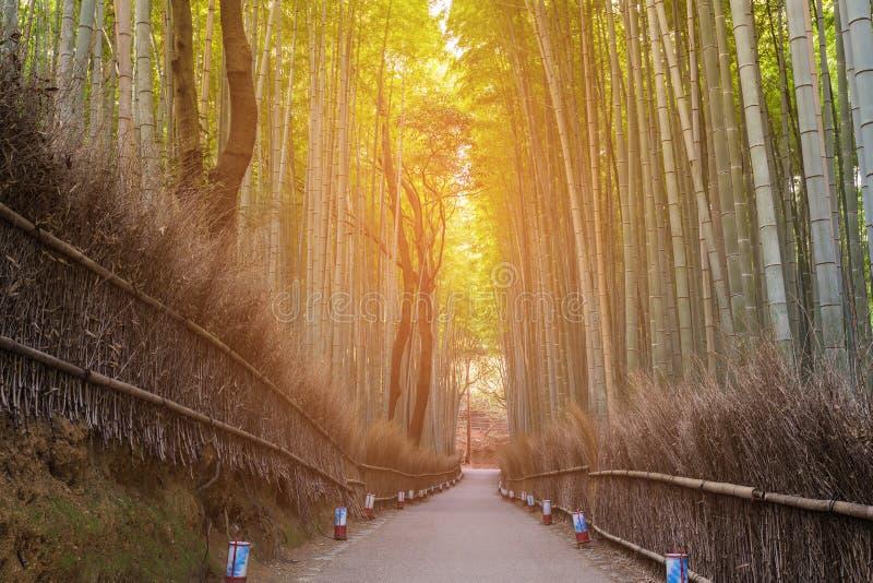 Floresta de bambu com wa de passeio imagens de stock