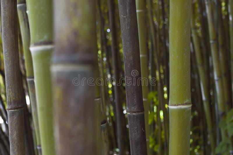 Floresta de bambu do zen foto de stock royalty free