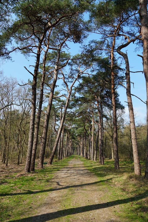 Floresta de Beerschoten, os Pa?ses Baixos foto de stock