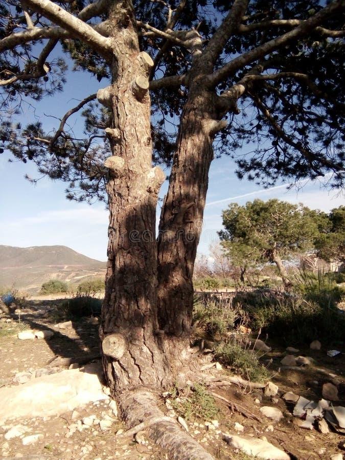 Floresta de Belgaid foto de stock