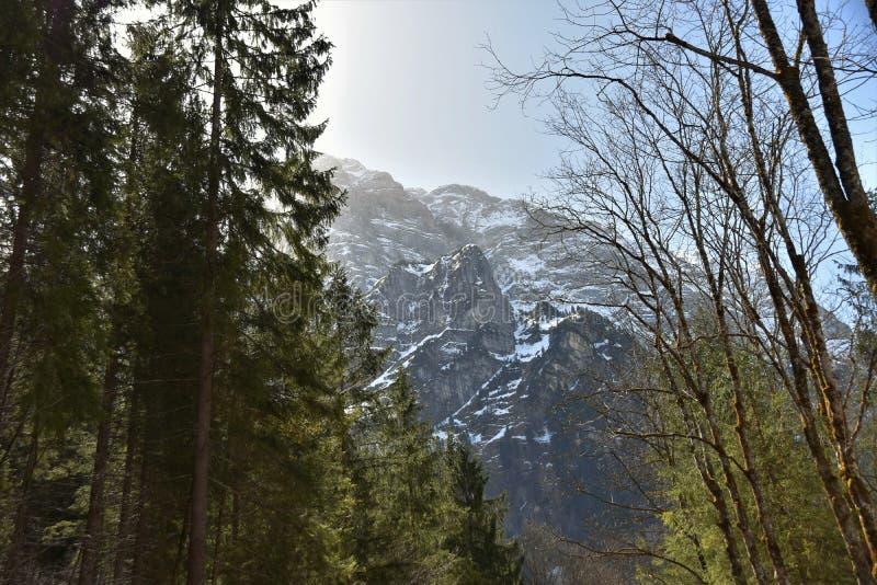 Floresta de Conifer ao redor do lago Klöntalersee no início do dia ensolarado da primavera em Klöntal fotos de stock