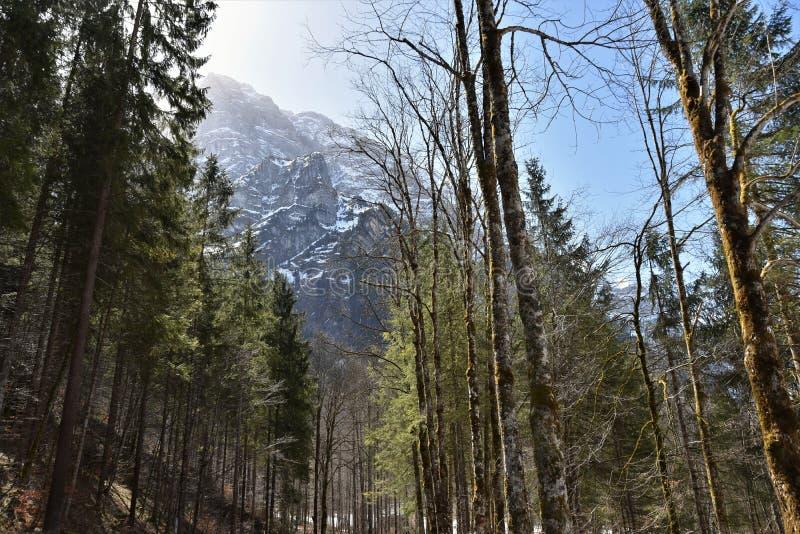 Floresta de Conifer encharcada ao redor do lago Klöntalersee no início do dia ensolarado da primavera em Klöntal foto de stock