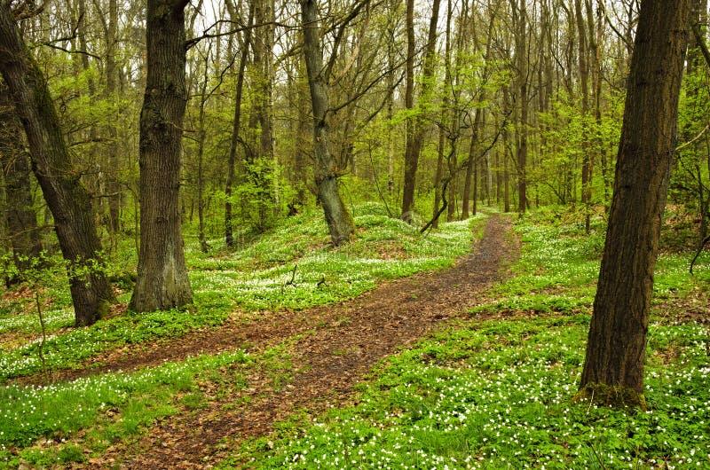 Floresta de florescência imagem de stock
