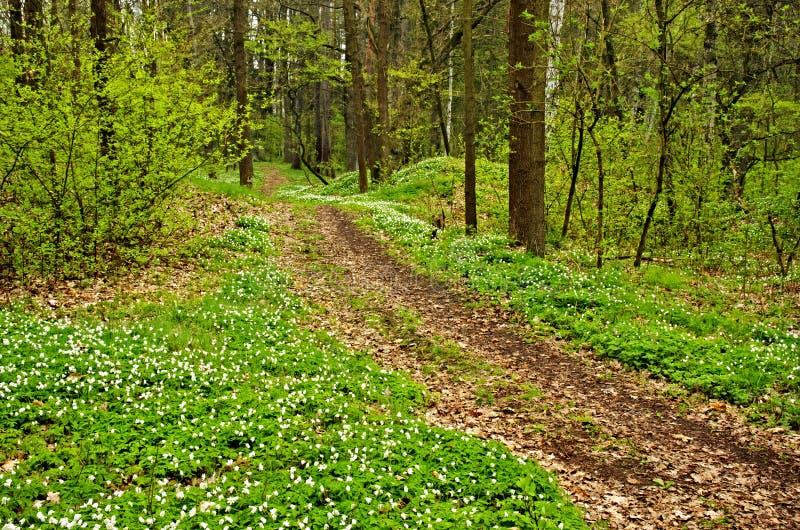 Floresta de florescência foto de stock
