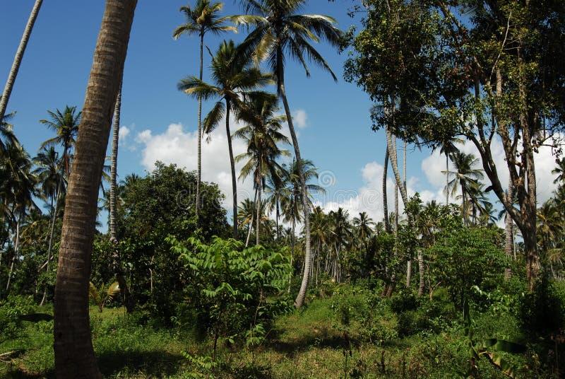 Floresta de Jozani fotografia de stock royalty free