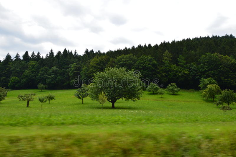 Floresta de madeira preta foto de stock royalty free
