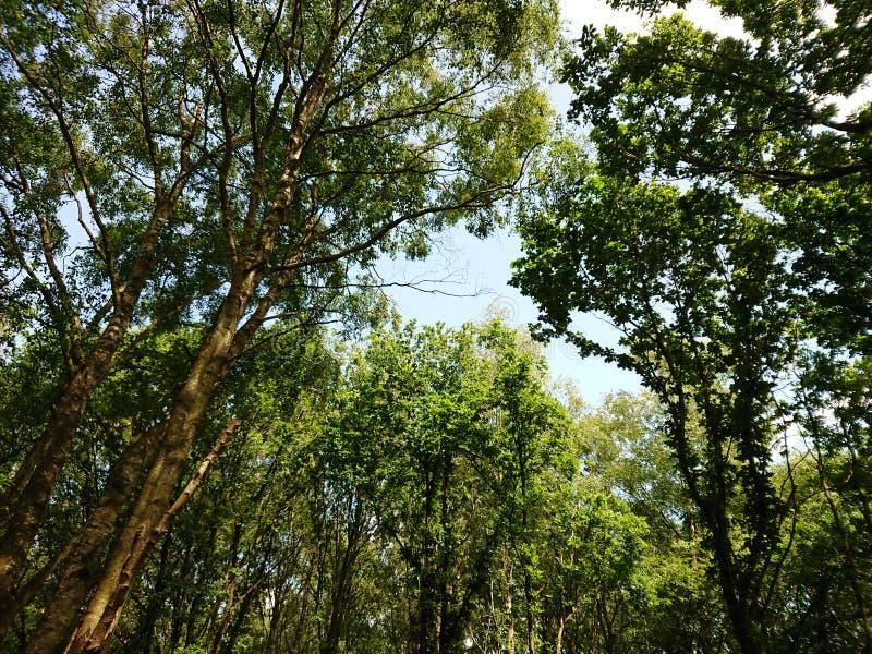 Floresta de Moore fotos de stock royalty free