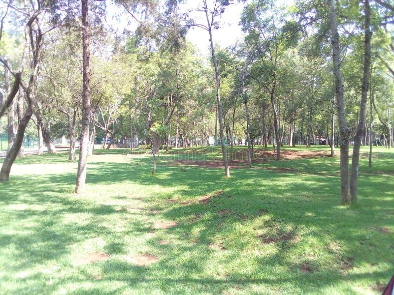 Floresta de Morelia imagem de stock royalty free