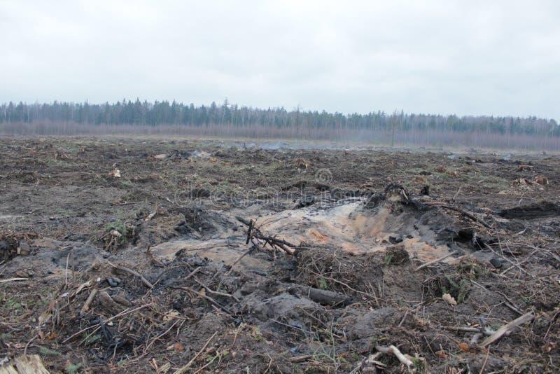 A floresta de morte foto de stock